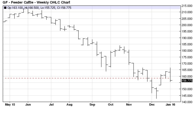 April Feeder Cattle weekly