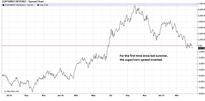 July Sugar Corn spread daily